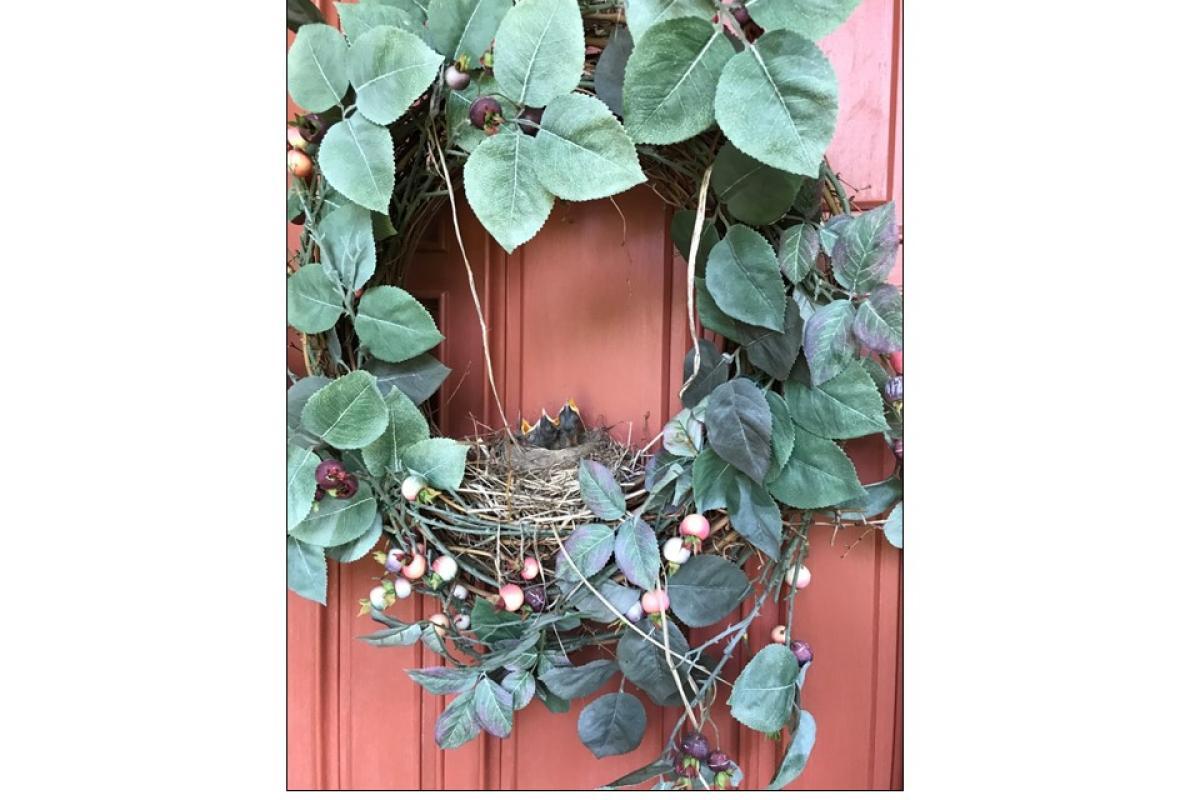 """Three Robins in a Wreath"" by Jessica Martinez"