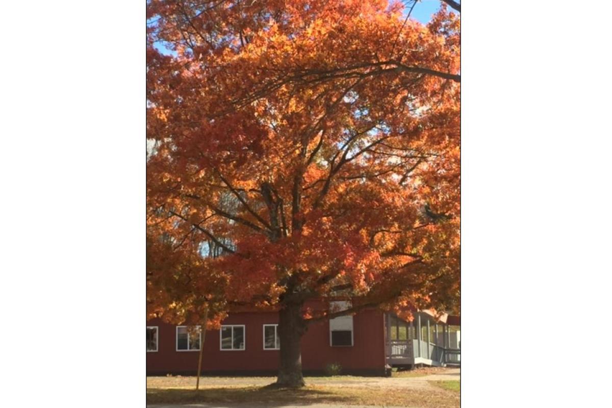 """""""Autumn Outside TIS"""" by Kathy Pagan"""